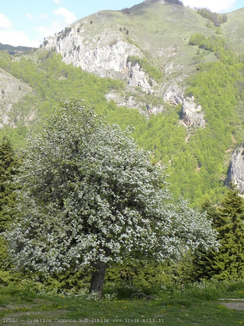 Val Rugova, un angolo di Kosovo in fiore